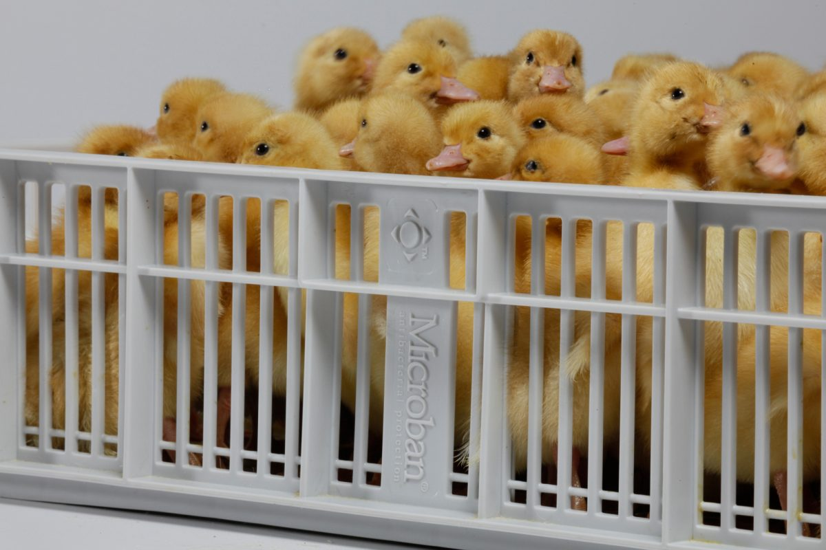 mbns18_featured_Microban Pas Reform Poultry Industry Egg Safety Hatchery Equipment Hatching Basket Egg Incubation