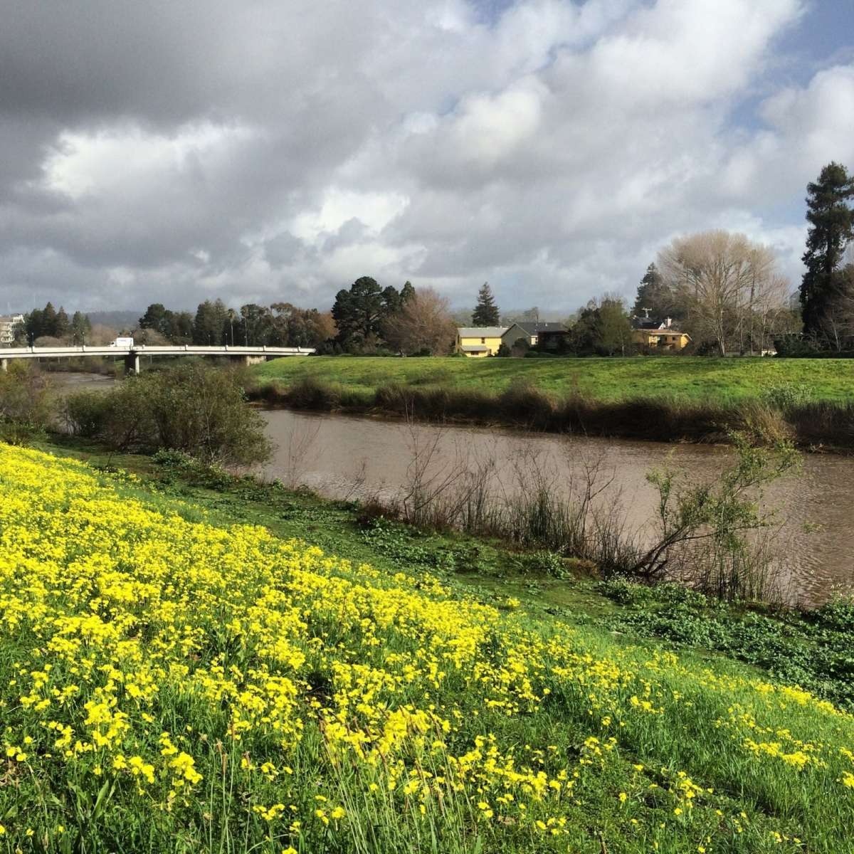 In February, the San Lorenzo's banks are carpeted in bright yellow sour grass.