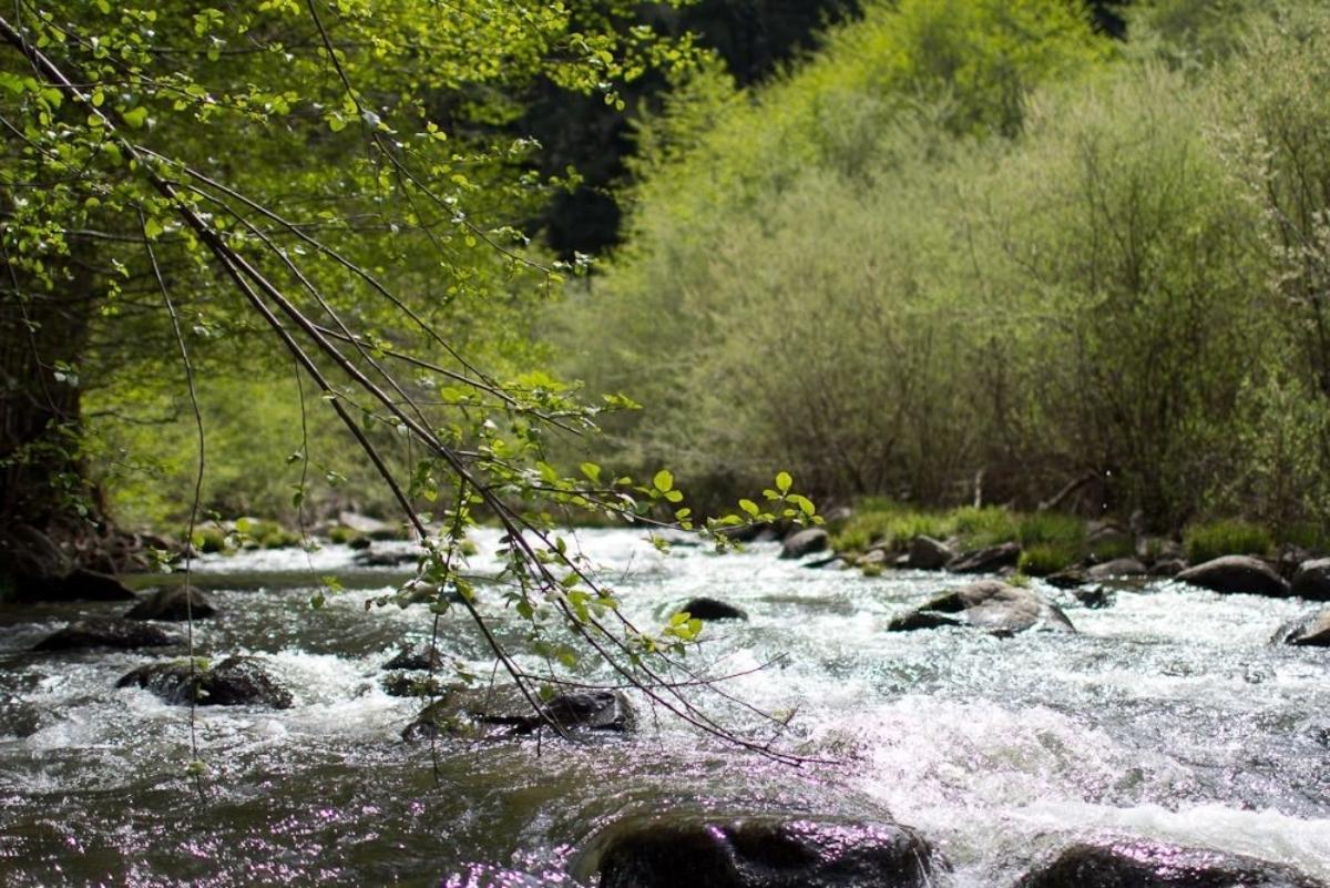 The San Lorenzo rushes through the Santa Cruz mountains, forming small rapids that feed into idyllic swimming holes. Photo courtesy of Eric Ressler.