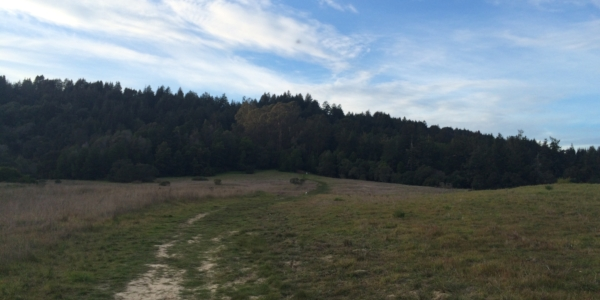 Santa Cruz Hikes: Fern Trail at Pogonip