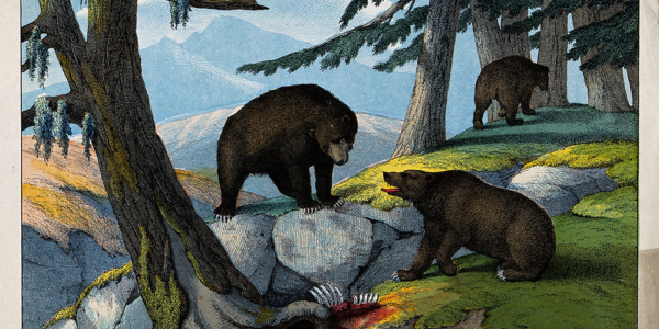 """Mountain Charley"" McKiernan: Fighting Grizzlies in the Santa Cruz Mountains"
