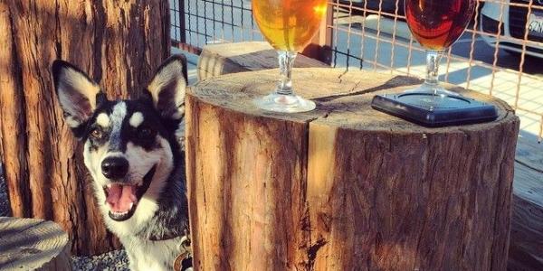 Santa Cruz Brewery Breakdown