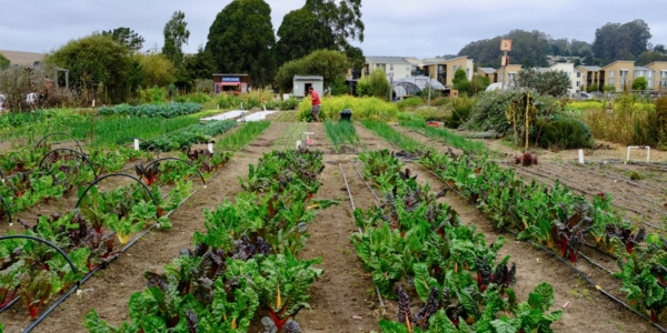 From Organic Farm to Compostable Fork: Best Eco-Friendly Eateries in Santa Cruz County