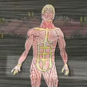 Learn about the muscular system.
