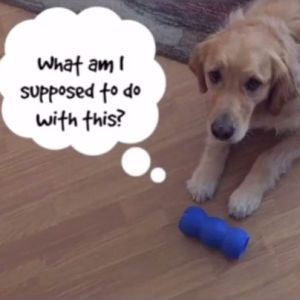 Learn about perseverance from Sam the dog.