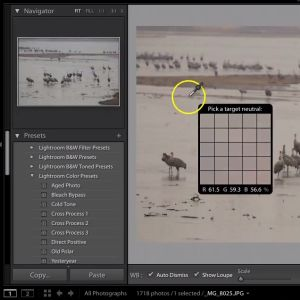 Learn about using white balance in Adobe's Lightroom.