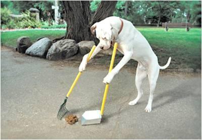 「狗狗隨地大便」的圖片搜尋結果