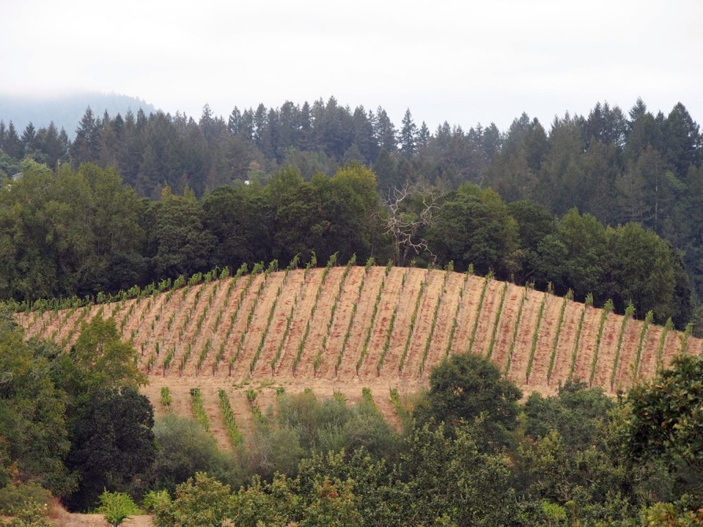 Iron Horse Vineyard