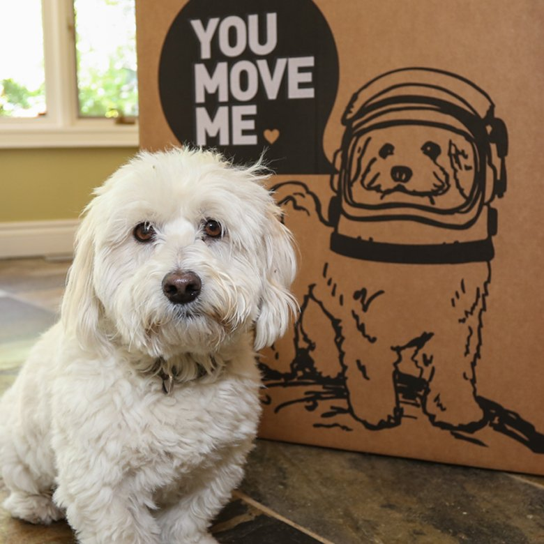 Even Your Dog will Love Our Local Moving Company