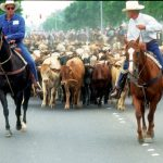 Cattle Drive. Year: 1994