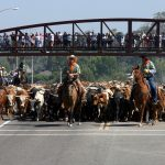 Cattle Drive. Year: 2007