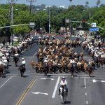 Cattle Drive. Year: 2008
