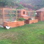 East Hills Symmetrical Hen House by Ryan Jiles