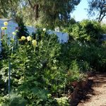 Family Garden by Amy Dillon