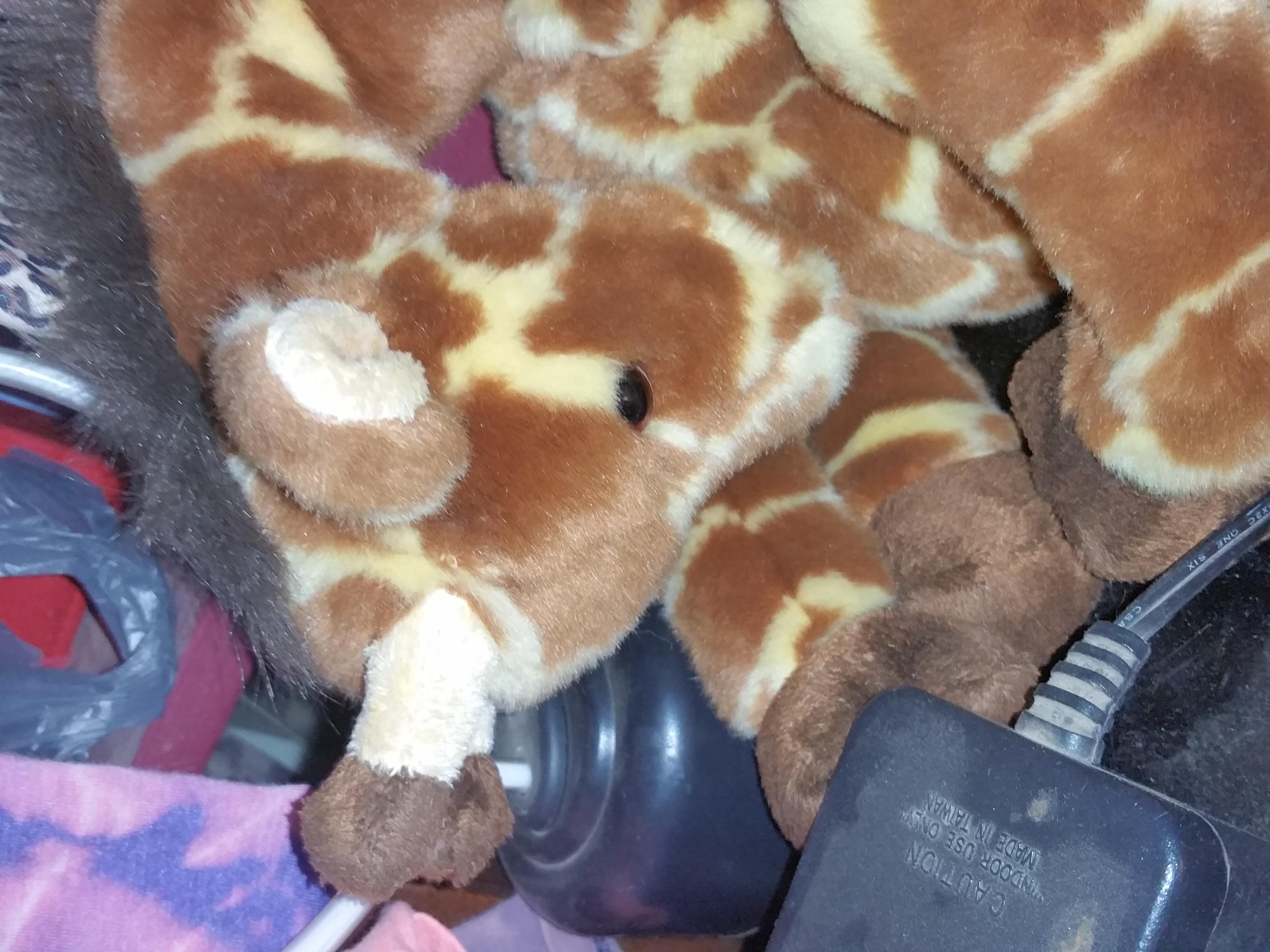 giraffes_67