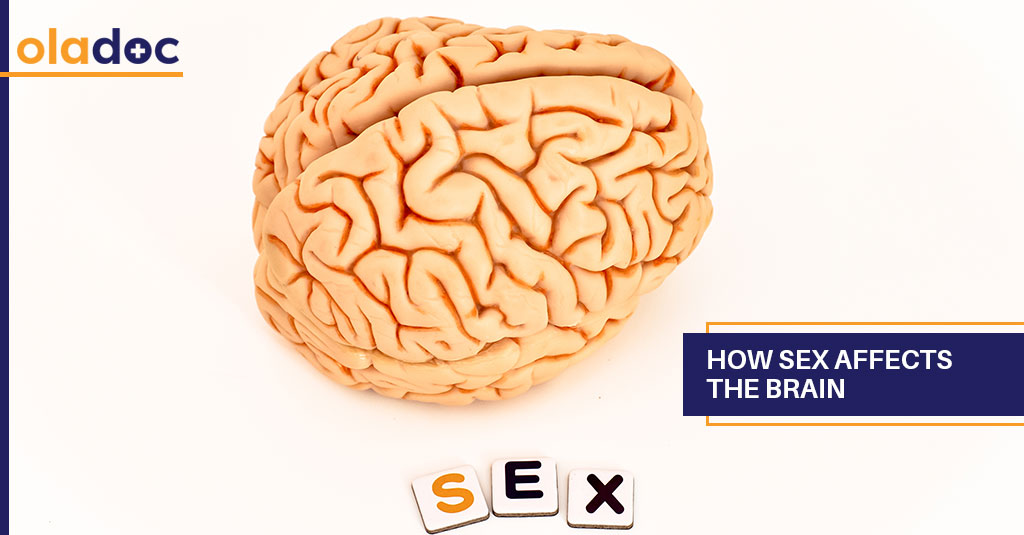 How_Sex_Affects_The_Brain