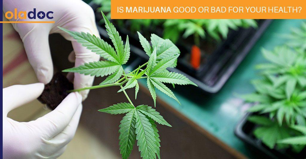Marijuana_Good_Or_Bad_For_Your_Health
