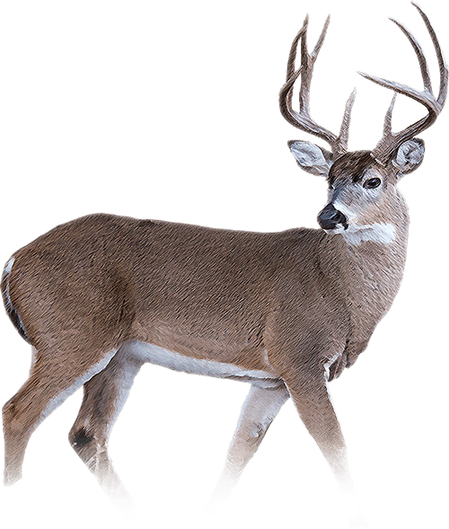 Whitetail Package Kinsel Cattle Company Outpost Find A Place To Hunt