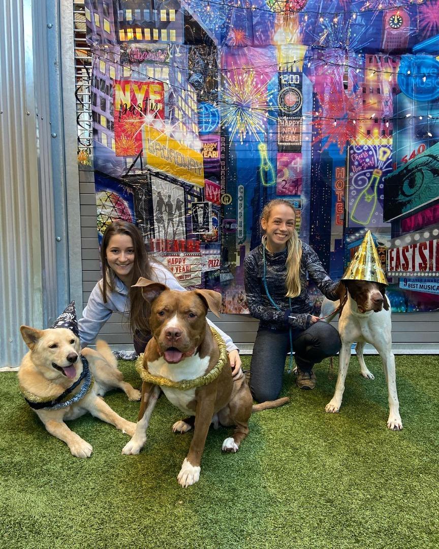 New Year at Pet Camp