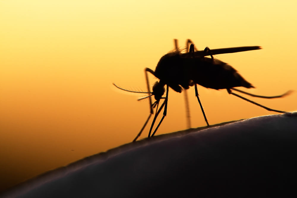 Plano Mosquitos West Nile Virus