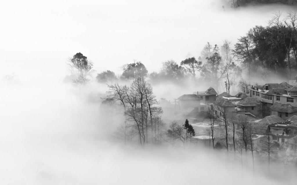 Photography black and white David Liu China trees in mist Asian art