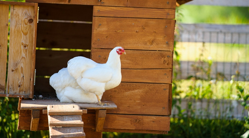 tour-de-coop-mckinney-backyard-chicken-coops