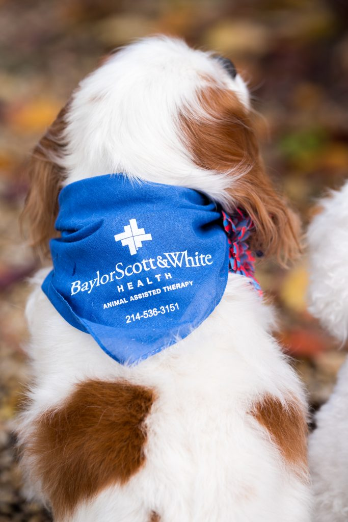 baylor_scott-white-therapy-dogs-puppies