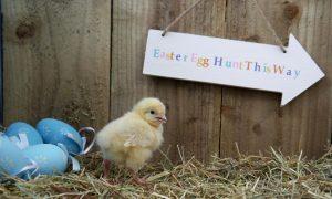 Easter Egg Hunt, Heritage Farmstead Museum, Plano