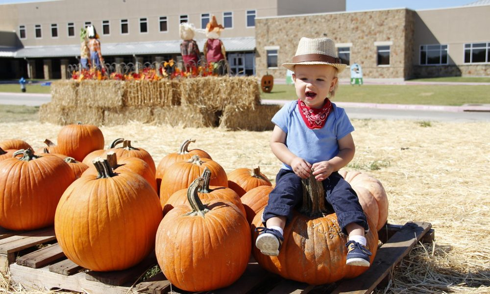 fall festivals plano, collin county, pumpkin patches, frisco