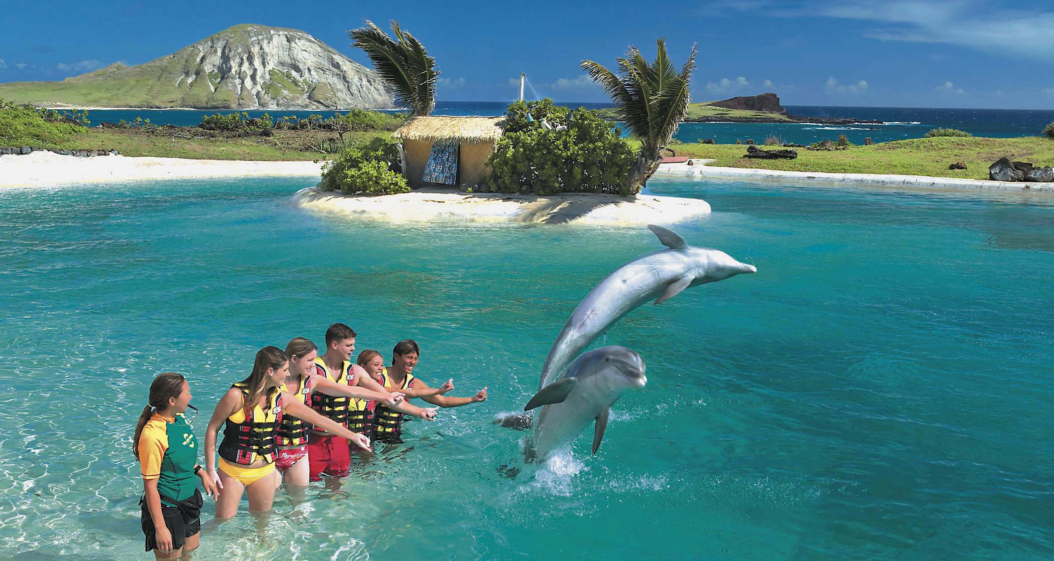Dolphin Swim Adventure Program image 1