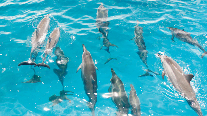 Product Dolphin Encounter Program