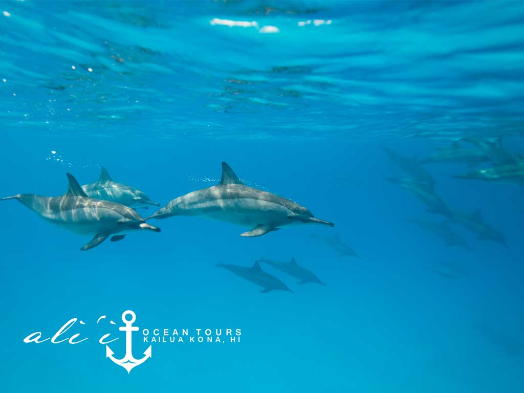 Product Dolphin Swim and Snorkel