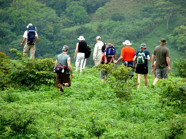 Product Rainforest Walk (Dreams)