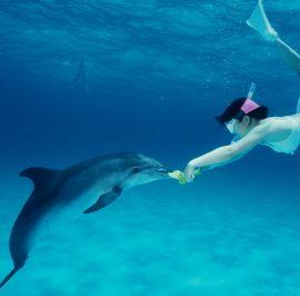 Wild Dolphin Swim Snorkel Combo