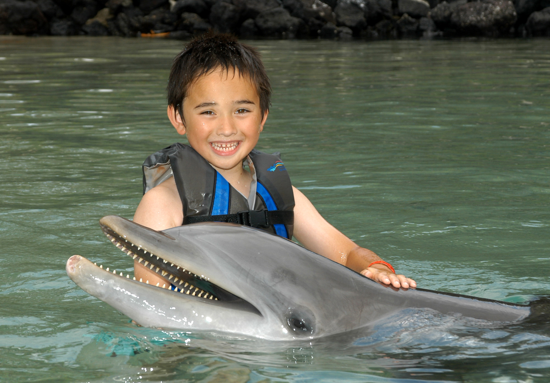 Discover Dolphin Babies
