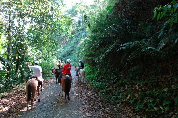 Product Horseback Riding From Jaco