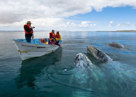 Whale Watch at Magdalena Bay