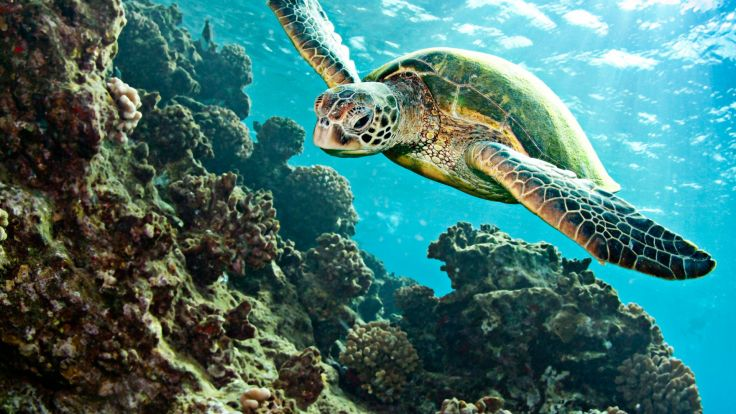 Makani Turtle Canyon Snorkel Sail