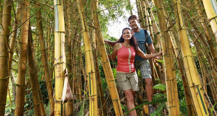 Product Manoa Rainforest and Bamboo Hike