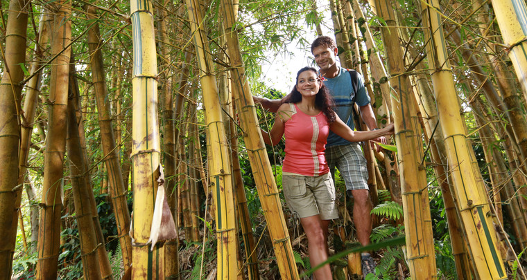 Product Manoa Rainforest and Bamboo Hike