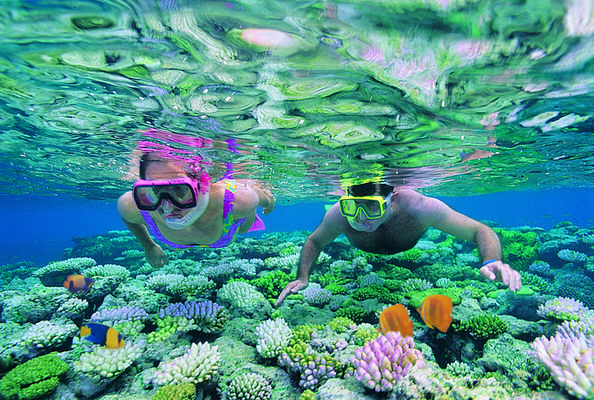 Product Outer Barrier Reef Snorkeling Cruise