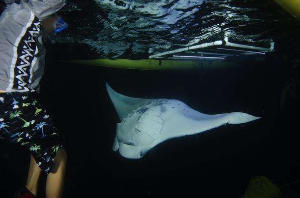 Product Night Manta Canoe Adventure