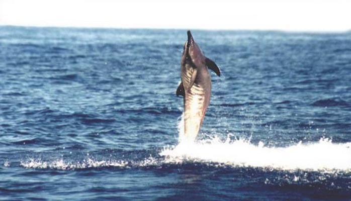 Kona Dolphin Swim Experience image 5