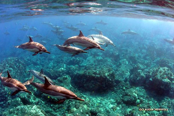 Kona Dolphin Swim Experience image 2