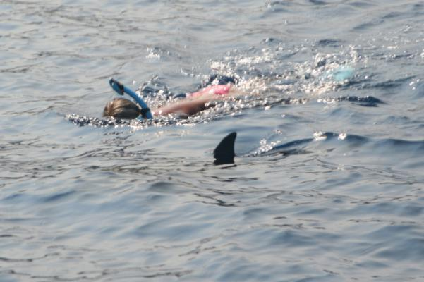 Kona Dolphin Swim Experience image 3