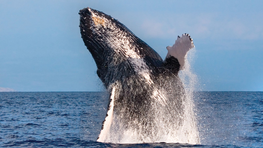Product Waikiki Whale Watch