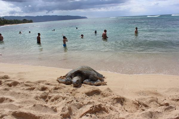 Circle Island Snorkel Tour image 5