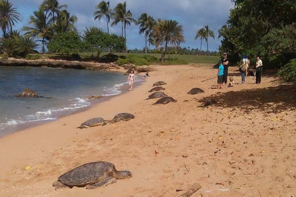 Circle Island Snorkel Tour image 7