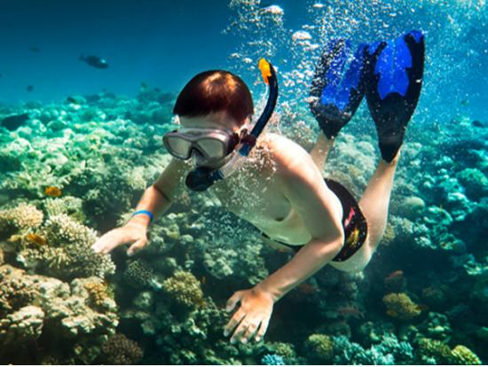 Lanai Dolphin Snorkel Experience