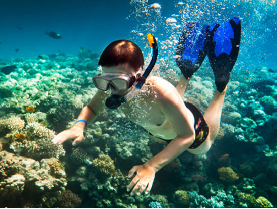 Product Lanai Dolphin Snorkel Experience